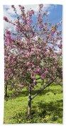 Moscow, Pink Cherries In Kolomenskoye Park Bath Towel