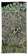 Moss Trees Hand Towel