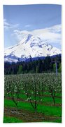Mount Hood Behind Orchard Blossoms Bath Towel