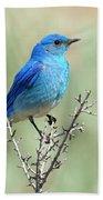 Mountain Bluebird Beauty Bath Towel