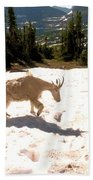 Mountain Goat Crossing A Snow Patch Bath Towel