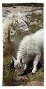 Mountain Goat Nanny And Kid Foraging At Columbine Lake - Weminuche Wilderness - Colorado Hand Towel