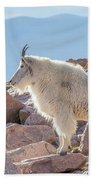 Mountain Goat Takes In Its High Altitude Home Bath Towel