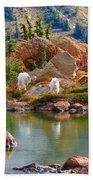 Mountain Goats In Early Fall Bath Towel