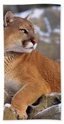 Mountain Lion On Snow-covered Rock Outcrop Bath Towel