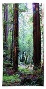 Muir Woods 1 Bath Towel