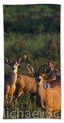 Mule Deer In Velvet 04 Bath Towel