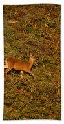 Mule Deer - Mattole Beach Bath Towel