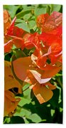 Multi-colored Bougainvillea At Pilgrim Place In Claremont-california  Bath Towel