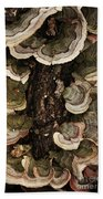 Mushroom Shells By The Lake Shore Bath Towel