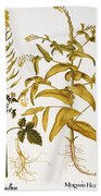 Mustard Plant, 1613 Hand Towel