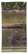 Mute Swan         St. Joe River          June         Indiana Bath Towel