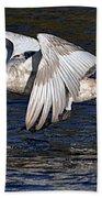 Mute Swan Take Off Bath Towel
