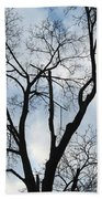 Nature - Tree In Toronto Bath Towel