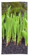 New Green Spring Shoots Hand Towel