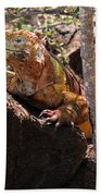 North Seymour Island Iguana In The Galapagos Islands Bath Towel