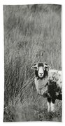 North Yorkshire Moors Sheep Bath Towel