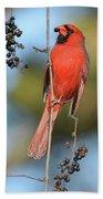 Northern Cardinal With Berry Bath Towel