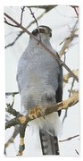 Northern Goshawk Bath Towel