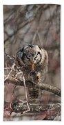 Northern Hawk Owl Having Lunch 9416 Bath Towel