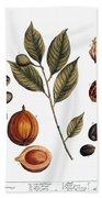 Nutmeg, 1735 Hand Towel