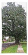 Oak  Tree  Jennings  Louisiana Bath Towel