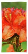 Office Art Prints Azaleas Botanical Landscape 11 Giclee Prints Baslee Troutman Bath Towel