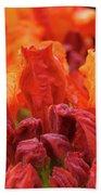 Office Art Prints Orange Azaleas Flowers 9 Giclee Prints Baslee Troutman Bath Towel