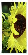 Office Art Sun Flowers Sunlit Sunflower Giclee Baslee Troutman Bath Towel