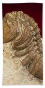 Oklahoma Trilobite. Bath Towel