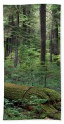 Old Growth Forest Bath Towel