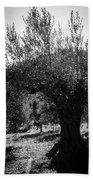 Olive Trees In Italy 2 Bath Towel