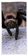 One Big Hairy Spider Bath Towel
