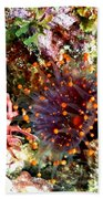 Orange Ball Corallimorph Anemone Bath Towel