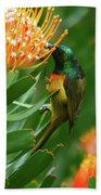 Orange-breasted Sunbird Feeding On Protea Blossom Bath Towel