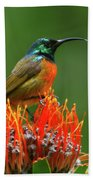 Orange-breasted Sunbird On Protea Blossom Bath Towel