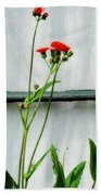 Orange Hawkweed Over Gray Muslin Bath Towel