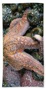 Orange Starfish Bath Towel
