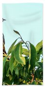 Orchard Oriole Songbird Perched On A Bush Bath Towel