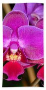 Orchid 422 Bath Towel