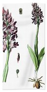 Orchis Militaris, The Military Orchid Bath Towel