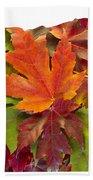 Oregon Maple Leaves Mixed Fall Colors Background Bath Towel
