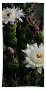Organ Pipe Cactus Flowers  Bath Towel