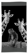 Our Wise Little Friend - Monkey And Giraffes In Black And White Bath Towel