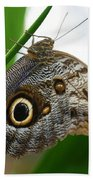 Owl Butterfly Bath Towel