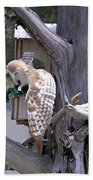 Owl Takeoff Bath Towel