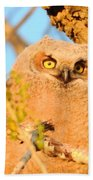 Owlet In A Spring Sunrise Bath Towel