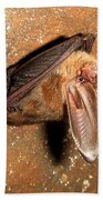 Ozark Big-ear Bat Bath Towel