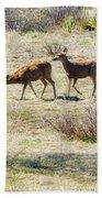 Pair Of Mule Deer Grazing At Chatfield Bath Towel
