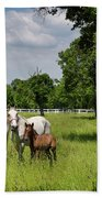 Panorama Of White Lipizzaner Mare Horses With Dark Foals Grazing Bath Towel